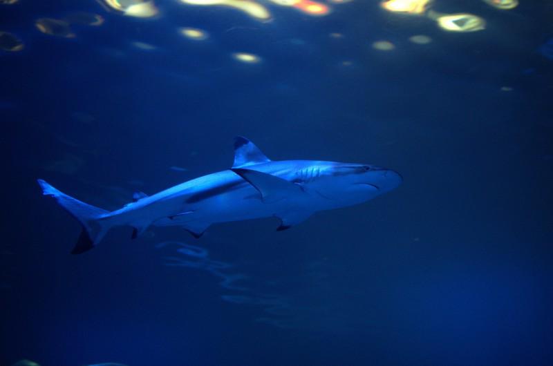 大阪海游馆:世界上最大的水族馆之一                                                                                               日本